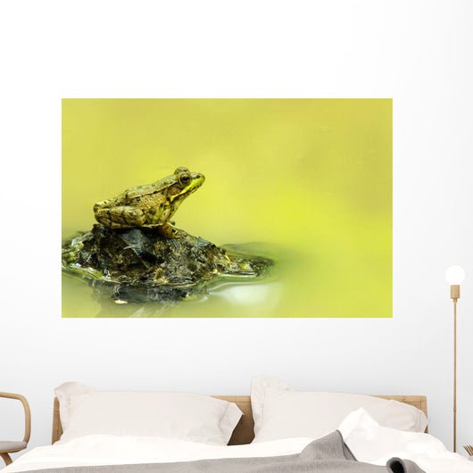 Green Frog Perched On Mud And Leaves, Vaudreuil, Quebec, Canada Wall Mural
