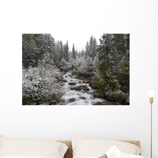 Snowy Foliage Along Stream In Autumn, Banff, Alberta, Canada Wall Mural