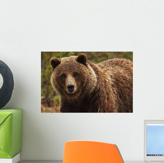 Grizzly Bear, Yukon Wall Mural