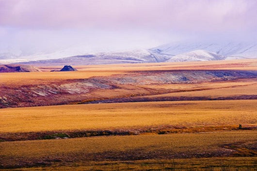 Fall Colours And Richardson Mountains, Dempster Highway, Yukon Wall Mural