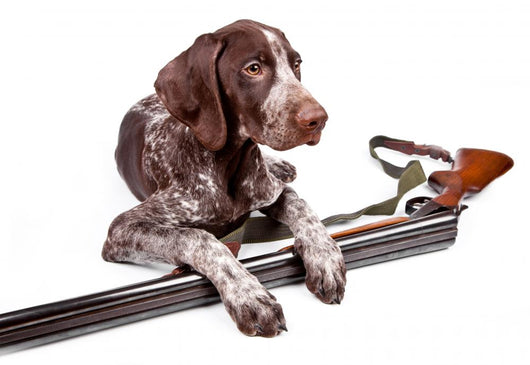 Hunting Dog With a Gun Wall Decal