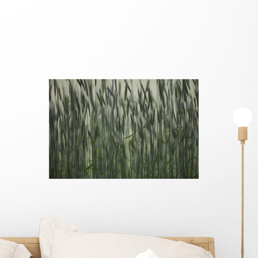 Long Grass In Farm Field Wall Mural