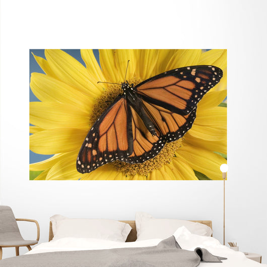 Monarch Butterfly On Sunflower Wall Mural
