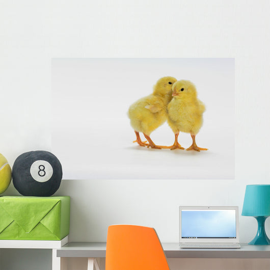 Yellow Chicks Baby Chickens Wall Mural