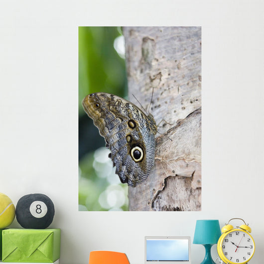 Owl Butterfly Resting On Trunk Wall Mural