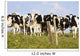 View Of Cows, Bas-Saint-Laurent Region, Quebec, Canada Wall Mural
