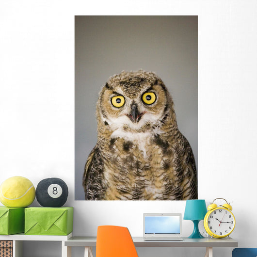 Immature Great Horned Owl Wall Mural