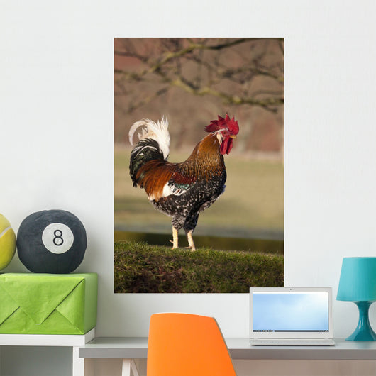 Rooster Wall Mural