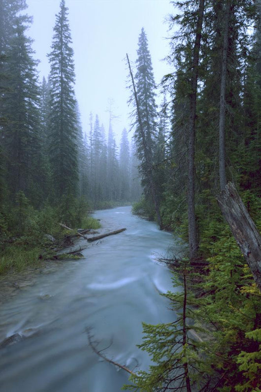 Fog Over The Emerald River, Yoho National Park, British Columbia Wall Mural