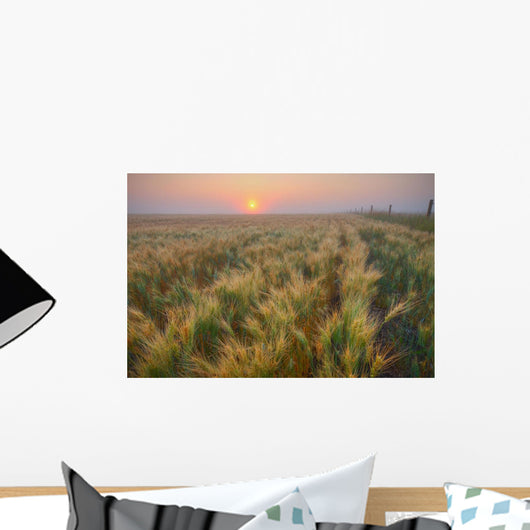Dew Covered Ripening Barley Before A Foggy Sunrise Wall Mural