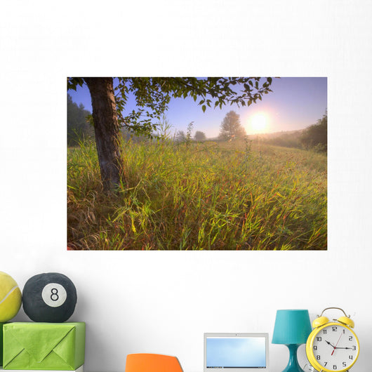 Sunrise On A Dew Covered Grassy Hill, North Of Edmonton, Alberta Wall Mural