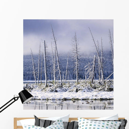 Fresh Snowfall And Bare Trees On The Vermillion Lakes Wall Mural