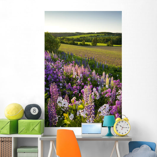 Lupins And Phlox Flowers, Clinton, Prince Edward Island Wall Mural