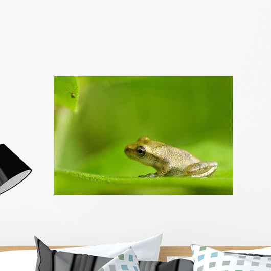 Young Spring Peeper On A Leaf Wall Mural