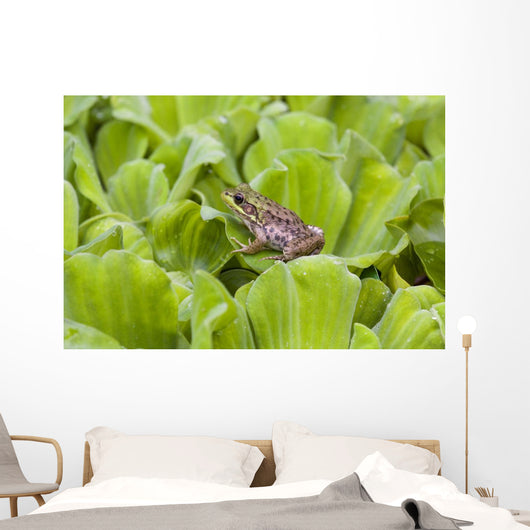 Leopard Frog Resting On Water Lettuce Wall Mural