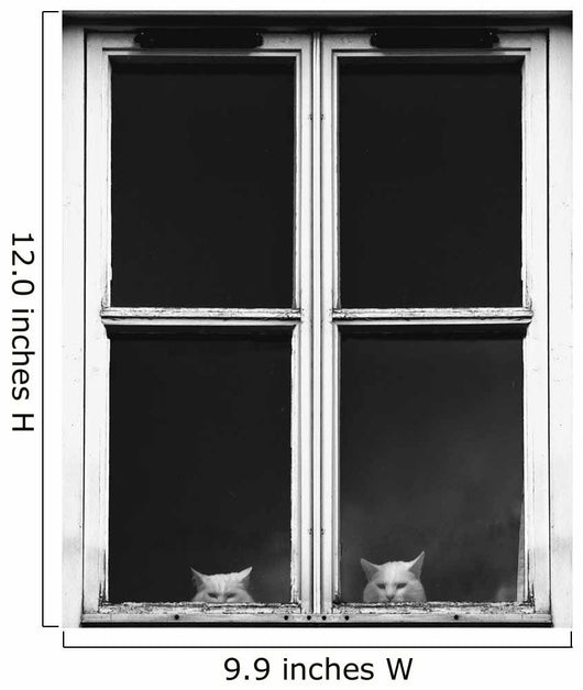 Two White Cats Sitting Side By Side Looking Out A Window Wall Mural