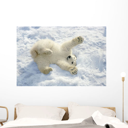 Polar Bear Cub Playing In Snow Alaska Zoo Wall Mural