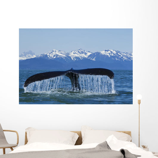 Humpback Whale Fluking In Lynn Canal With Chilkat Mountains Wall Mural