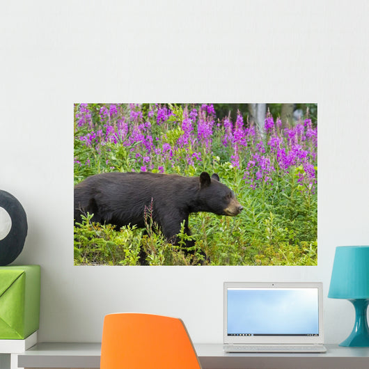 A Black Bear Searches For Soap Berries Along The Tatshenshini River Wall Mural