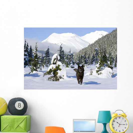 Black Wolf Wall Mural