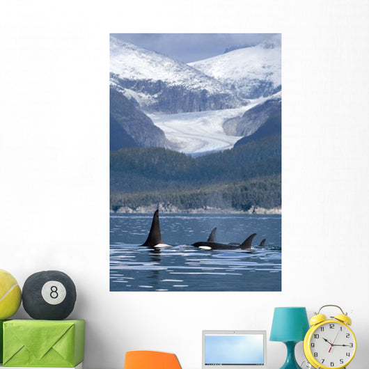 A Pod Of Orca Whales Surface In Favorite Passage Wall Mural
