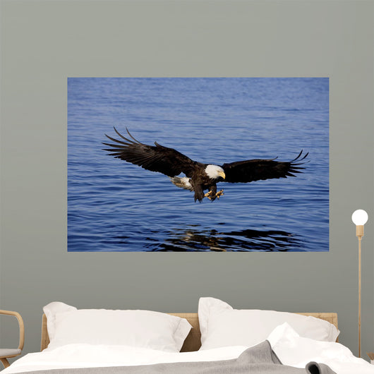 A Bald Eagle Swoops Wall Mural