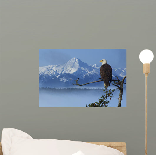 Bald Eagle Perched Wall Mural