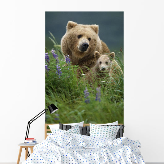 Sow Grizzly & Cubs In Grass Hallo Bay Katmai Np Alaska Wall Mural