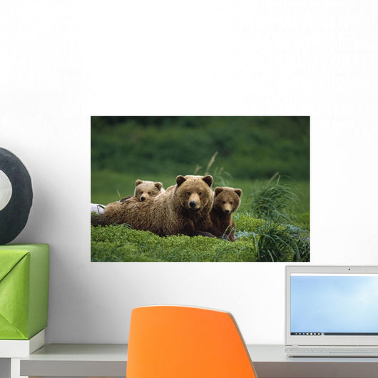 /Ngrizzly Bear Mother And Cubs Lay In Field Southwest Ak/Nsummer Wall Mural