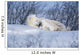 Polar Bear Sow & Cubs Resting In Snow Churchill Canada Wall Mural