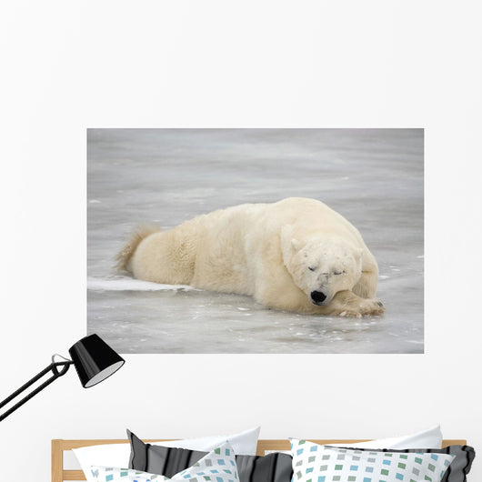 Polar Bear Asleep On Sea Ice At Churchill, Manitoba, Canada Wall Mural