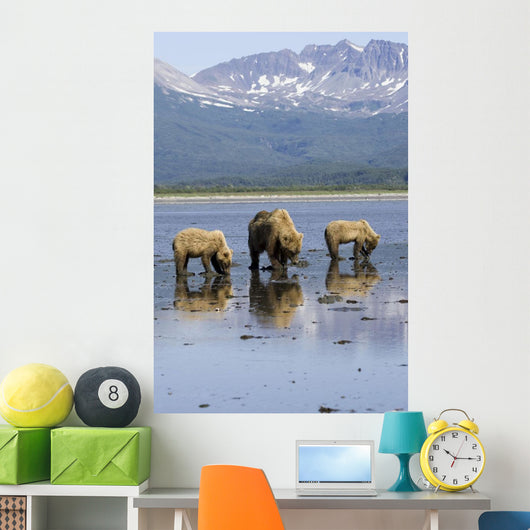 Brown Bears Digging Clams Wall Mural