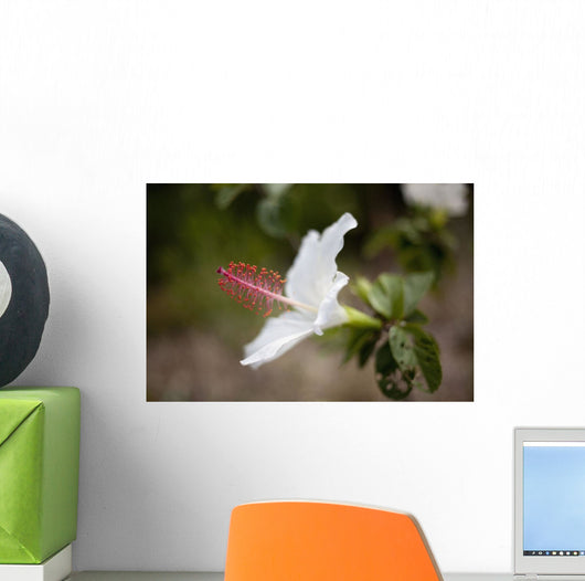 Hawaii, Maui, A closeup of white hibiscus flower Wall Mural