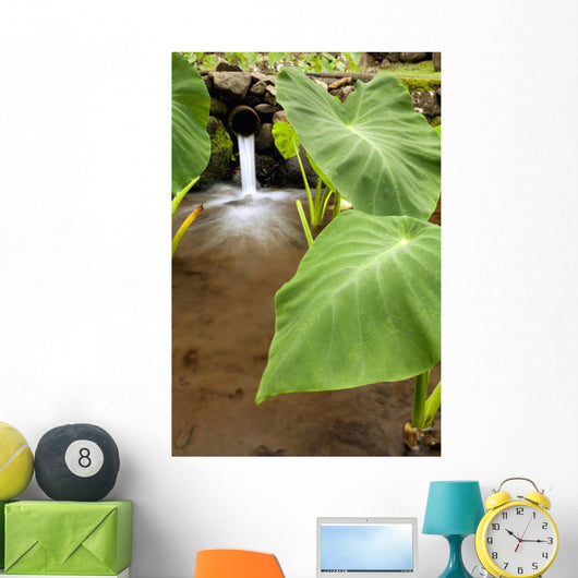 Hawaii, Maui, Large Taro leaves in a pond Wall Mural