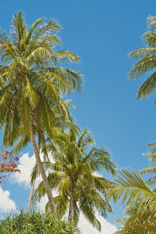 Thailand, Phuket, Vibrant palm trees and clear blue sky Wall Mural