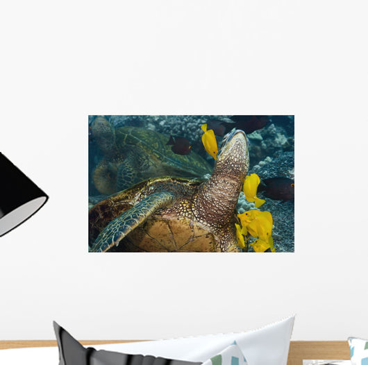 Hawaii, A green sea turtle being cleaned by yellow tangs Wall Mural
