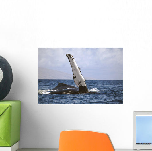 Hawaii, Humpback whale raises its pectoral fin above the surface Wall Mural