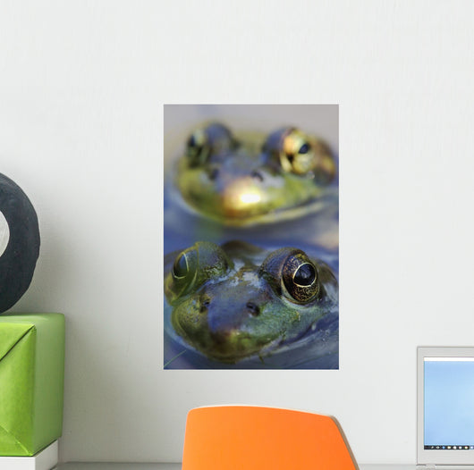 Northern Green Frogs Mating In A Pond Wall Mural