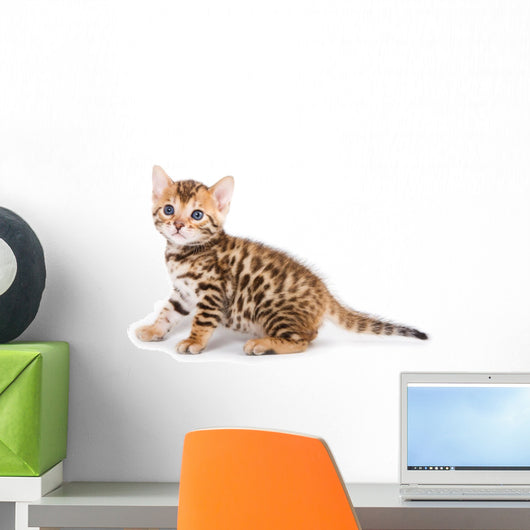 Bengal kitten on white background Wall Decal