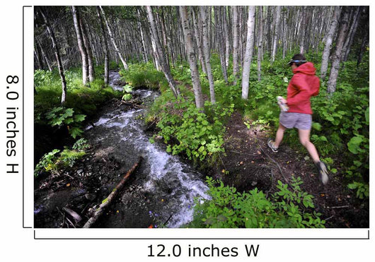 Woman Jogging Through A Birch Forest Alongside A Small Stream, Alaska Wall Mural