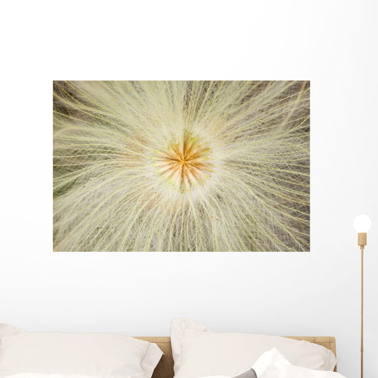 Macro Of Mountain Avens Wildflower Seedhead In Chugach State Park Wall Mural