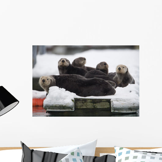 Group Of Sea Otters Hauled Out On A Boat Dock In Valdez Harbor Wall Mural