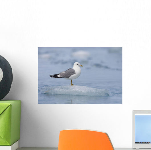 Mew Gull Adult On An Iceberg Wall Mural