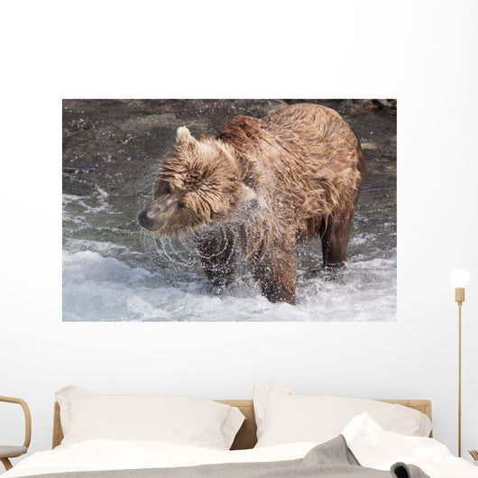 Brown Bear Shakes Dry In Funnel Creek Wall Mural