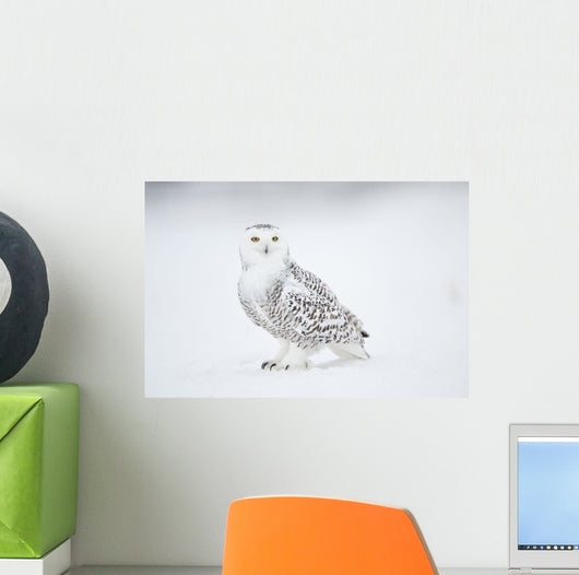 Snowy Owl On Snow, Saint-Barthelemy, Quebec, Canada, Winter Wall Mural