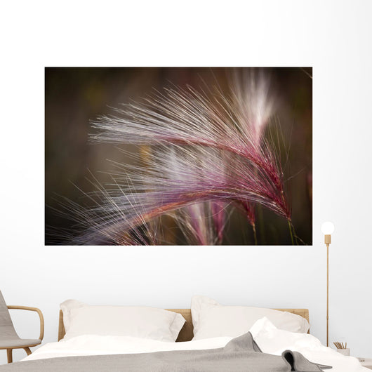 Macro Of Pink Grass In The Maclaren River Valley Wall Mural