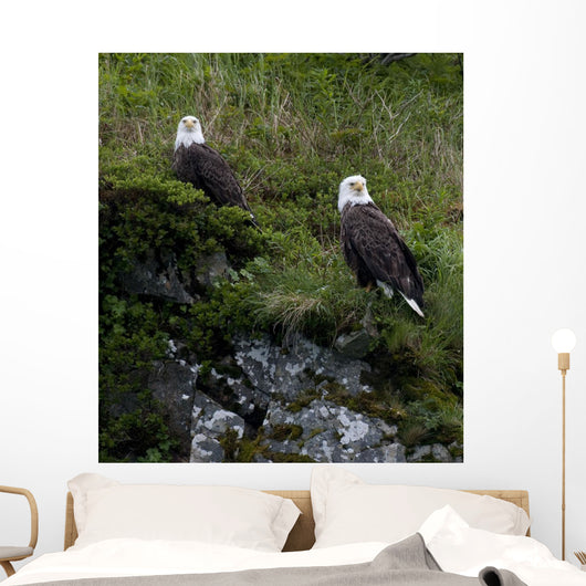 Portrait Of Two Bald Eagles Resting On A Cliff In Kukak Bay Wall Mural