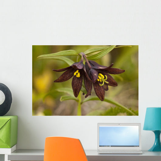 Close Up Of Chocolate Lily Blooms Wall Mural