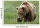 Brown Bear Eating Sedge Grasses In Hallo Bay Wall Mural