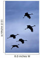Flock Of Flying Sandhill Cranes Against The Sky Preparing To Land Wall Mural